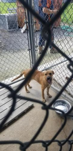 Found/Stray Female Dog last seen Female Australian Shepherd and Female Cur picked up on Campbell Together. 8.26.19 In Chambers County., Winnie, TX 77665