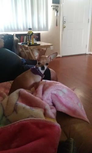 Lost Female Dog last seen Garnet Ave and Pima, Mesa, AZ 85210
