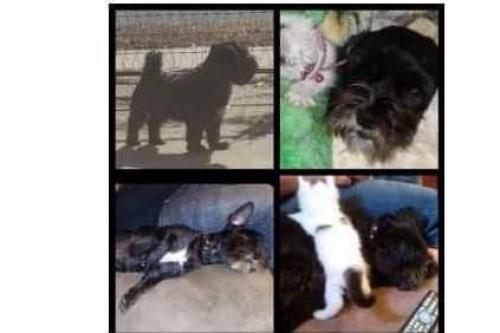 Lost & Found Dogs, Cats, and Pets in Oklahoma City, OK 73127