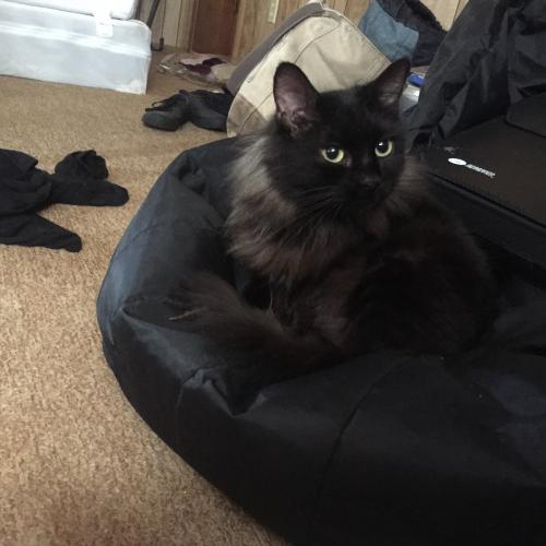 Lost Unknown Cat last seen Shelly drive in orange Texas , Orange, TX 77632
