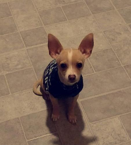 Lost Male Dog last seen Pinecove, Vidor, TX 77662