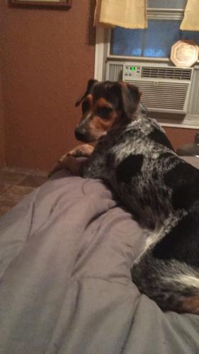 Lost Female Dog last seen Craigen Road Fannett Texas, Hamshire, TX 77705