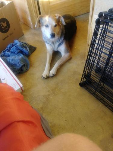 Lost & Found Dogs, Cats, and Pets in North Carolina 28714