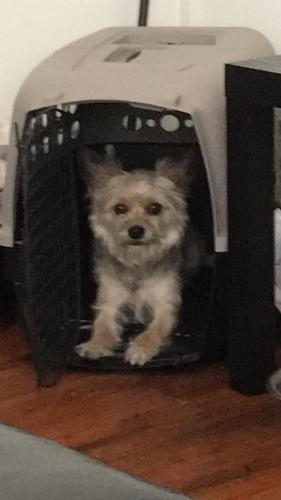 Lost & Found Dogs, Cats, and Pets in Greenville, SC 29641