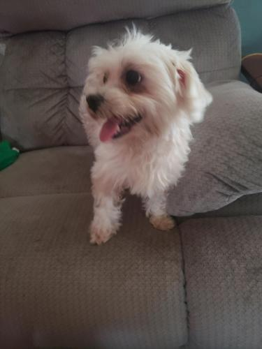 Lost & Found Dogs, Cats, and Pets in Wichita Falls, TX 76310