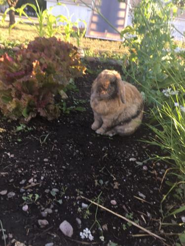 Lost & Found Dogs, Cats, and Pets in Missoula, MT 59801