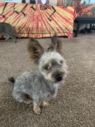 Lost & Found Dogs, Cats, and Pets in El Paso, TX 79904