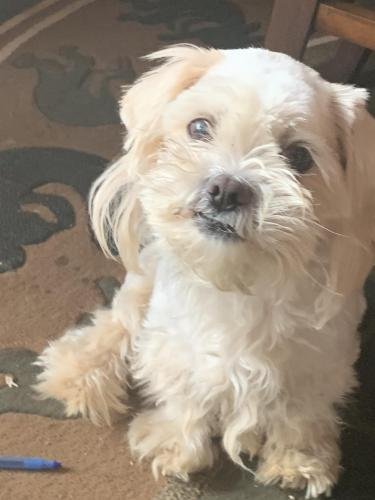 Lost & Found Dogs, Cats, and Pets in Chico, CA 95901 - Page