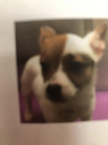 Lost Female Dog last seen Indian river and sparrow rd, Chesapeake, VA 23323