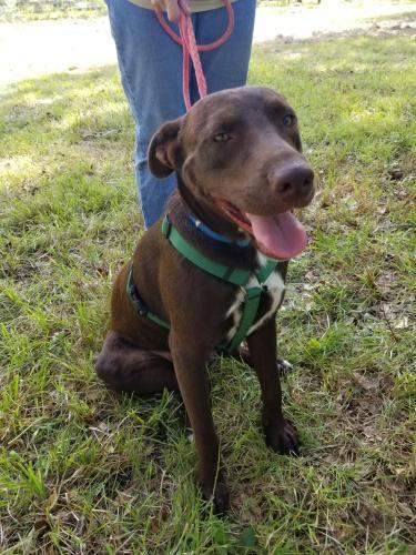 Found/Stray Male Dog last seen Hwy 69, Lumberton, TX 77657