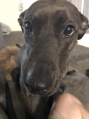 Lost Female Dog last seen Stonewall and Berkshire, Hampton, VA 23666