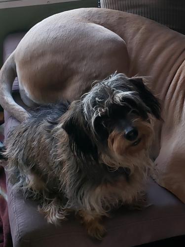 Lost Female Dog last seen Kiker, Coon, Englin, Winnie, TX 77665