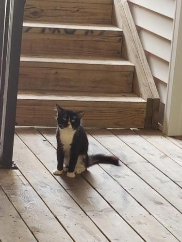 Found/Stray Unknown Cat last seen At the apartment building, Virginia Beach, VA 23464