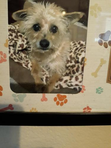 Lost Male Dog last seen Pioneer Blvd and Obregon st, Whittier, CA 90602
