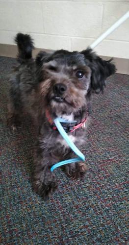 Lost Female Dog last seen Washington Blvd&state Ave. 11th street, Kansas City, KS 66102