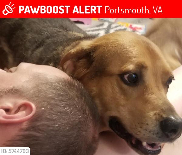 Lost Male Dog last seen Harvard rd and foxgrape, Portsmouth, VA 23701