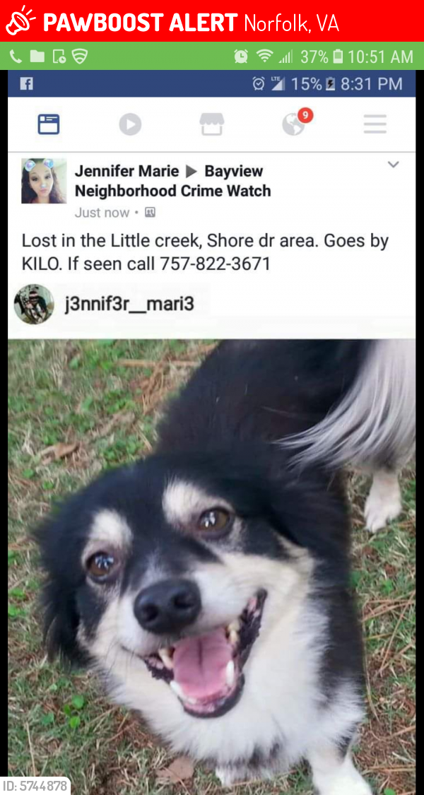 Lost Male Dog last seen Little creek rd , Norfolk, VA 23518