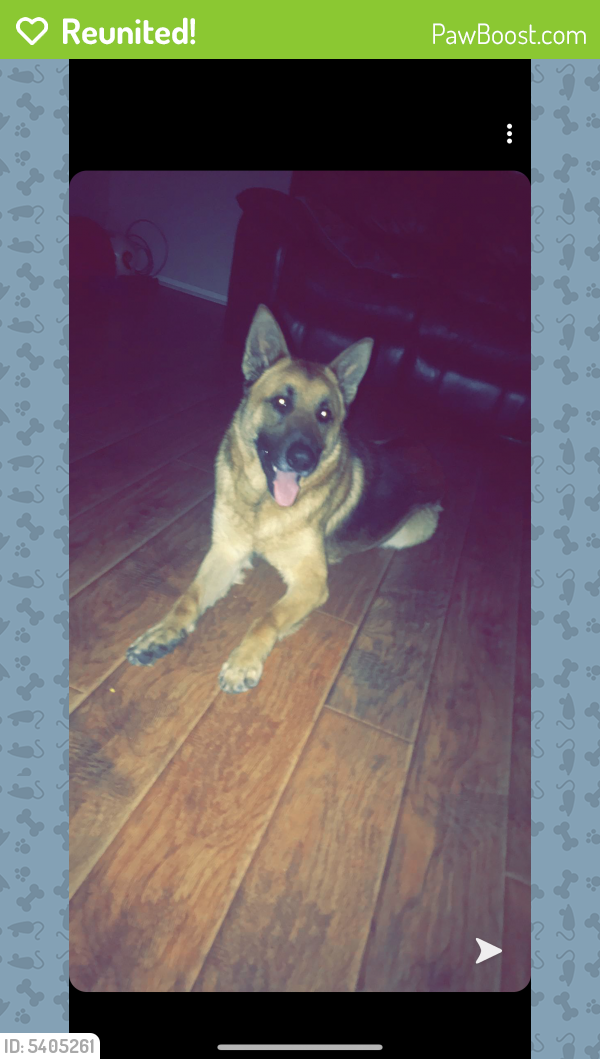 Reunited Male Dog last seen Near Weiler Blvd & Blueridge Dr, Fort Worth, TX 76112