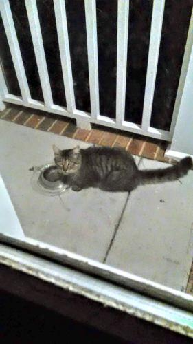 Found/Stray Unknown Cat last seen Eaver Ct. and Larkspur, Portsmouth, VA 23703