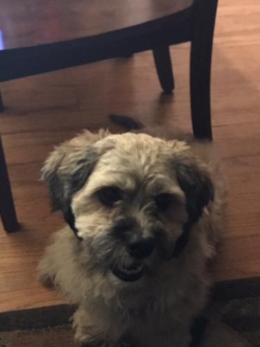 Lost Male Dog last seen Shoop ave. And vinyl ridge ave, Norfolk, VA 23509