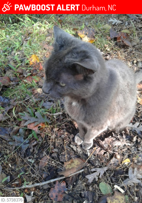 Lost Male Cat last seen Near Windover Drive, Durham, NC 27712 - near Mason Road and Guess Road, Durham, NC 27712