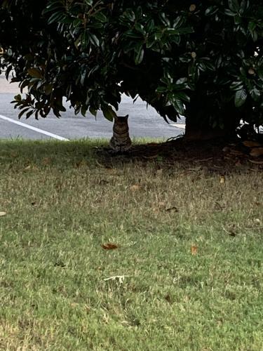 Found/Stray Unknown Cat last seen Eden Way, Chesapeake, VA 23320