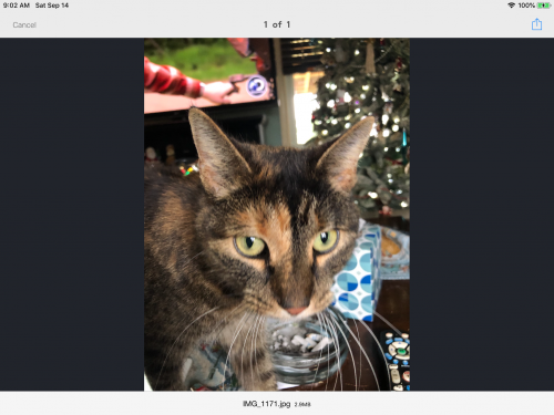 Lost Female Cat last seen East Princess Anne, Norfolk, VA 23502
