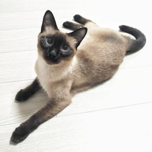 Found/Stray Male Cat last seen Near benton blvd, Kansas City, MO 64127