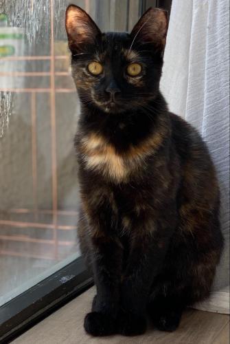 Lost Female Cat last seen Montecito Rd, behind Kohls shopping center, Seal Beach, CA 90740