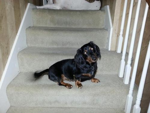 Lost Male Dog last seen 57th Ter and Earnshaw, Shawnee, KS 66216