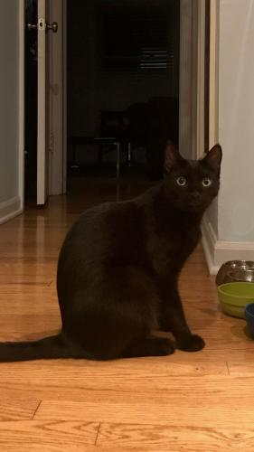 Lost Male Cat last seen state park road and Norwood in Fairway Kansas, Shawnee Mission, KS 66205