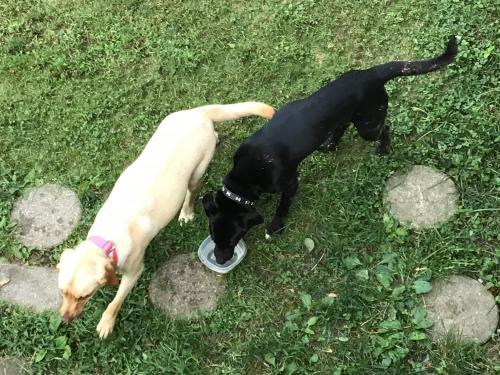 Found/Stray Male Dog last seen 50th Metropolitan, Turner Area, Kansas City, KS 66106