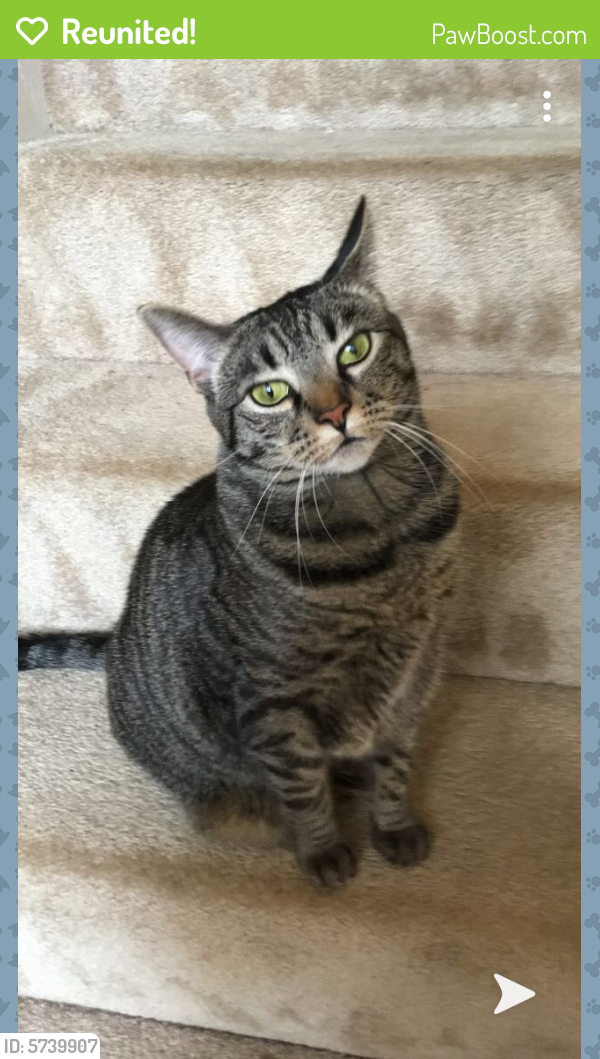 Reunited Female Cat last seen Bennett's pasture rd and Foxcroft rd, Suffolk, VA 23435