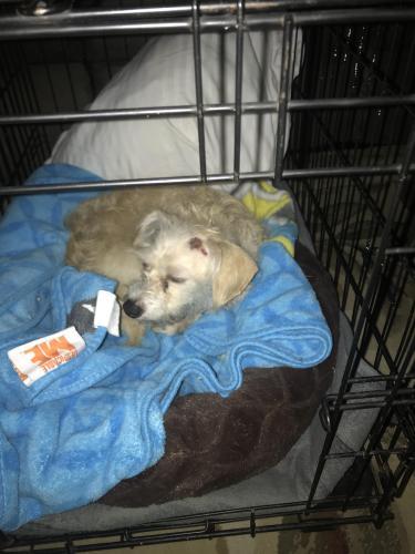 Found/Stray Female Dog last seen Lakewood & South St, Lakewood, CA 90712