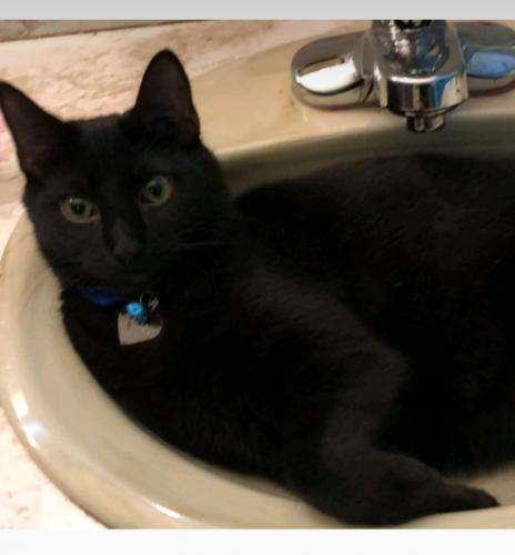 Lost Male Cat last seen Campbell rd and Bland blvd, Newport News, VA 23602