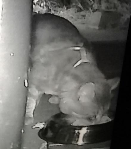 Found/Stray Unknown Cat last seen Anatola Elementary, Los Angeles, CA 91406