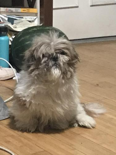 Lost Male Dog last seen Normandie and 96th St, Los Angeles, CA 90047