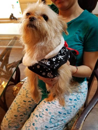 Lost Female Dog last seen Jefferson, Newport News, VA 23601