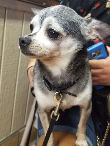 Lost Male Dog last seen 54th and Main St, Los Angeles, CA 90011