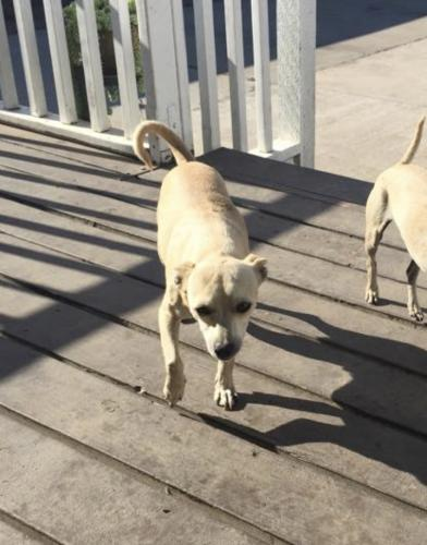 Lost Male Dog last seen E 120th st and S Central ave, Los Angeles, CA 90059