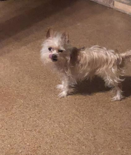 Lost Male Dog last seen Concord, Beaumont, TX 77708