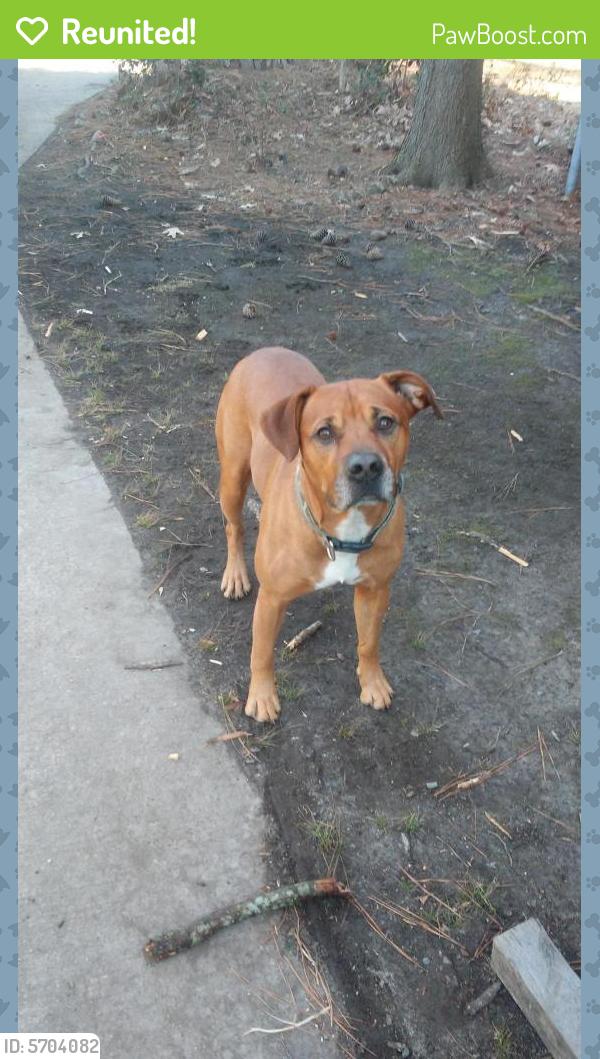 Reunited Male Dog last seen Bonney rd, Virginia Beach, VA 23452