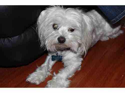 Lost Male Dog last seen Huntington and Eastern, Los Angeles, CA 90032
