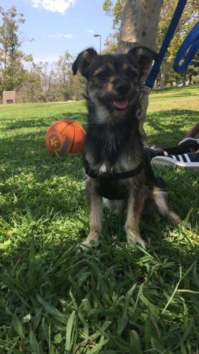 Lost Male Dog last seen Avalon and 79st, Los Angeles, CA 90003