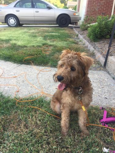 Found/Stray Female Dog last seen Gamage Drive and Townley, Norfolk, VA 23518