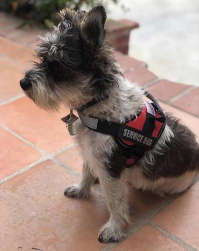 Lost Male Dog last seen Santa Monica Beach, Santa Monica, CA 90401