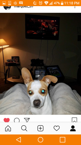 Lost Male Dog last seen peck and Tyler, El Monte, CA 91733
