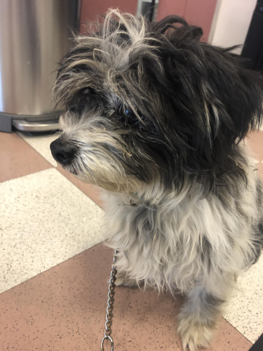 Found/Stray Female Dog last seen Travel Town, Griffith Park, Los Angeles, CA 90027