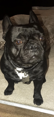 Lost Male Dog last seen Outside of Carlton Square in Inglewood,Ca, Inglewood, CA 90305