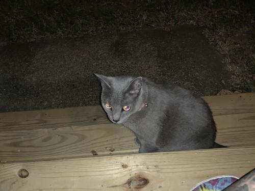 Found/Stray Male Cat last seen D view Ave, Norfolk VA 23503, Norfolk, VA 23503
